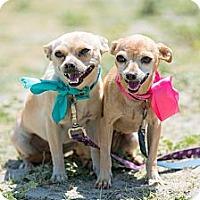 Adopt A Pet :: MIMI - Poway, CA