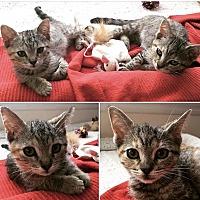 Adopt A Pet :: Lily & Emma - Los Angeles, CA