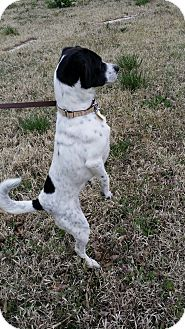 Jack Russell Terrier Mix Dog for adoption in Fort Riley, Kansas - Princess