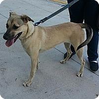 Adopt A Pet :: Rhoda - Miami, FL