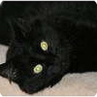 Adopt A Pet :: Mr. Poe - lake elsinore, CA