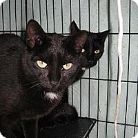 Adopt A Pet :: Jack - Riverhead, NY