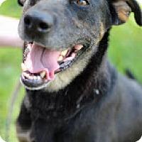 Adopt A Pet :: Amazon - Tinton Falls, NJ