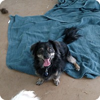 Adopt A Pet :: Buddy - Simi Valley, CA