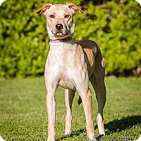Adopt A Pet :: Nancy - DRD program - Owensboro, KY