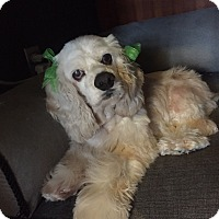 Adopt A Pet :: Honor - Burbank, CA