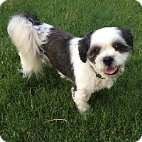 Adopt A Pet :: Fred - Arlington, TN