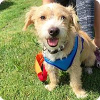 Adopt A Pet :: Carney - Adoption Pending - Gig Harbor, WA