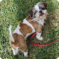 Adopt A Pet :: Lucky - Houston, TX