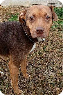 Beagle/Mixed Breed (Medium) Mix Dog for adoption in MC KENZIE, Tennessee - Abby