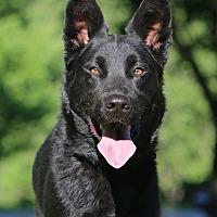 Adopt A Pet :: Powell - Nashville, TN