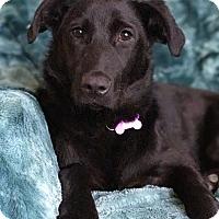 Adopt A Pet :: Dee-lite - santa monica, CA