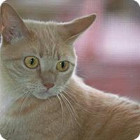 Adopt A Pet :: Jillian - Stafford, VA