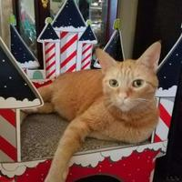 Adopt A Pet :: Reba - Des Moines, IA