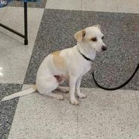 Adopt A Pet :: Peaches - Phoenix, AZ