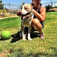 Adopt A Pet :: Mel - Fresno, CA