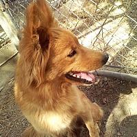 Adopt A Pet :: Nikita - Santa Rosa, CA