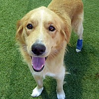 Adopt A Pet :: Harley & Cooper #5 - Rockville, MD