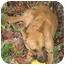 Photo 1 - Shepherd (Unknown Type)/Spitz (Unknown Type, Medium) Mix Dog for adoption in Pittsboro/Durham, North Carolina - Jampa = Love