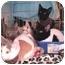Photo 1 - Domestic Shorthair Kitten for adoption in Yorba Linda, California - Kittens waiting for homes