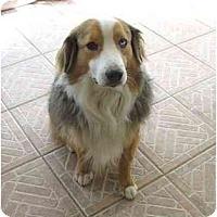 Adopt A Pet :: Kato - Orlando, FL