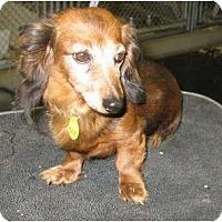 Adopt A Pet :: BUBBLES - Scottsdale, AZ