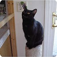 Adopt A Pet :: Molly - Thousand Oaks, CA