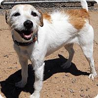 Adopt A Pet :: Sammy - Siren, WI