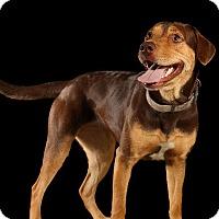 Adopt A Pet :: BABY GIRL - Pegram, TN