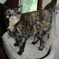 Adopt A Pet :: Mila Camilla (COURTESY POST) - Baltimore, MD