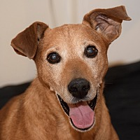 Adopt A Pet :: Earnest! - New York, NY