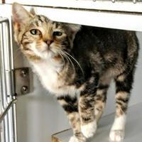 Adopt A Pet :: L'Oreal - Rio Rancho, NM