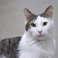 Adopt A Pet :: Xander - Sioux Falls, SD
