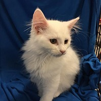 Adopt A Pet :: Everest, Whitney, and Fuji - Knoxville, TN