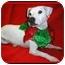 Photo 1 - Jack Russell Terrier Dog for adoption in Omaha, Nebraska - Chico