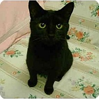 Adopt A Pet :: Pearl - Mission, BC