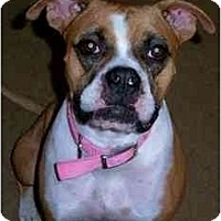 Adopt A Pet :: Caramel - Albany, GA