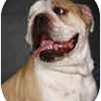 Adopt A Pet :: Max - conyers, GA