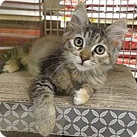 Adopt A Pet :: CELINA - Diamond Bar, CA