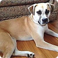 Adopt A Pet :: Maggie - Douglas, ON