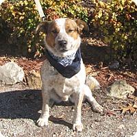 Adopt A Pet :: Bandit - Oakland, AR