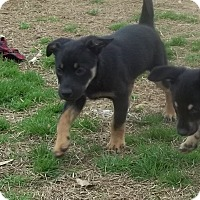 Adopt A Pet :: Taco pending adoption - Manchester, CT