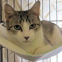 Adopt A Pet :: Rosalie - Lunenburg, MA