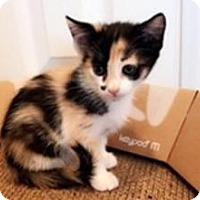 Adopt A Pet :: Plum - Anaheim Hills, CA
