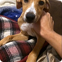 Adopt A Pet :: Jagger in CT - East Hartford, CT