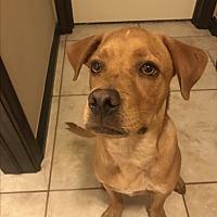 Adopt A Pet :: Wendell - Yukon, OK
