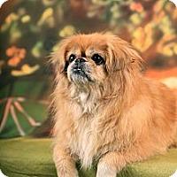 Adopt A Pet :: Paris (in Maine) - Vansant, VA