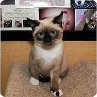 Adopt A Pet :: Fudge - Farmingdale, NY