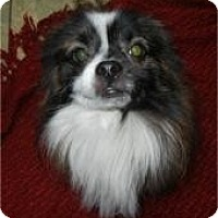 Adopt A Pet :: Clifford ADOPTED!! - Antioch, IL