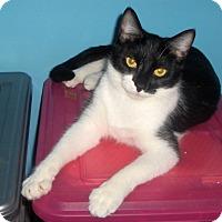 Adopt A Pet :: Tom - Richmond, VA